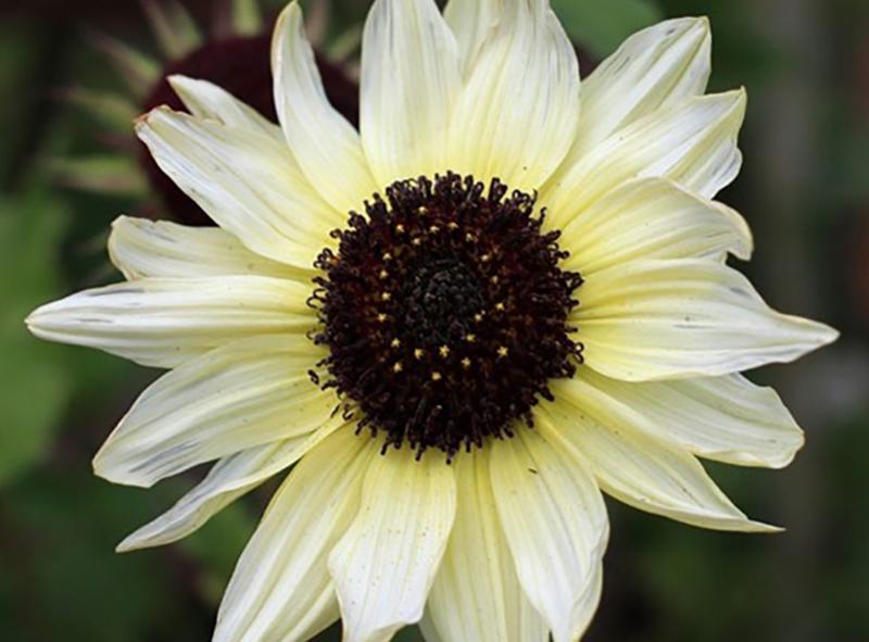 Biết ý nghĩa hoa để chọn hoa chia buồn cho phù hợp