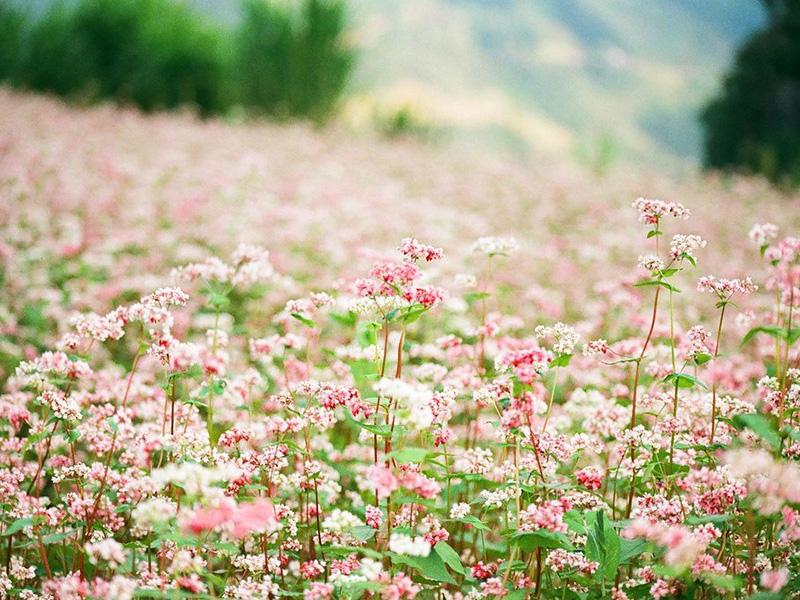 Hoa Kiều Mạch thể hiện cho tình yêu