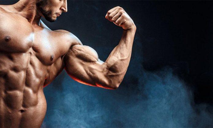 Protein giúp tăng cơ giảm mỡ