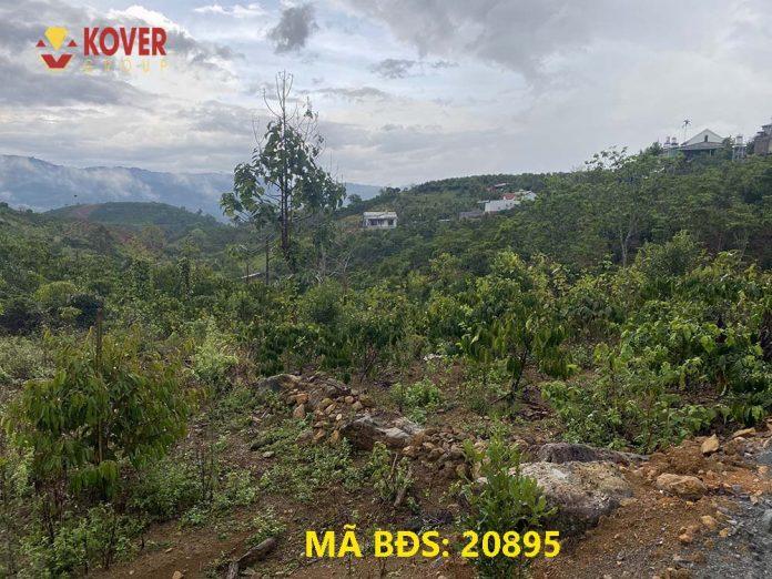 Đất nông nghiệp Bảo Lộc